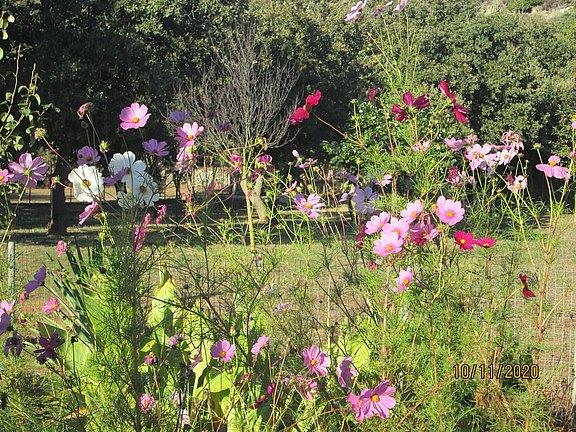 Wild flower area