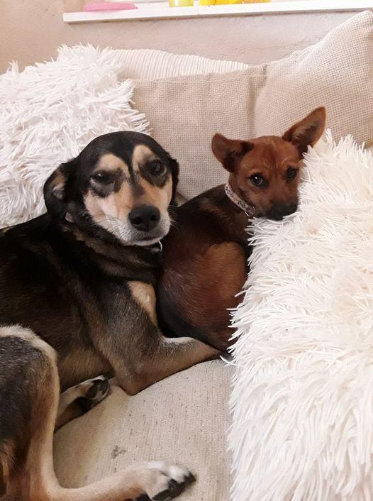 Benji + Kanella